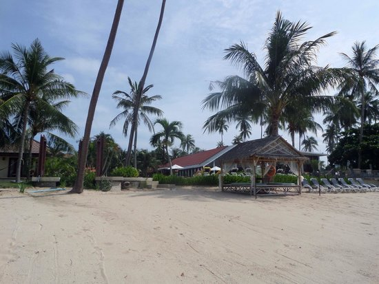 Centra Coconut Beach Resort Samui : Stones throw from the beach, but the sea not the best very sea weedy