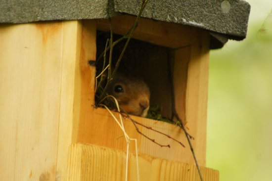 Forest How Guest House: Unusual bird box resident