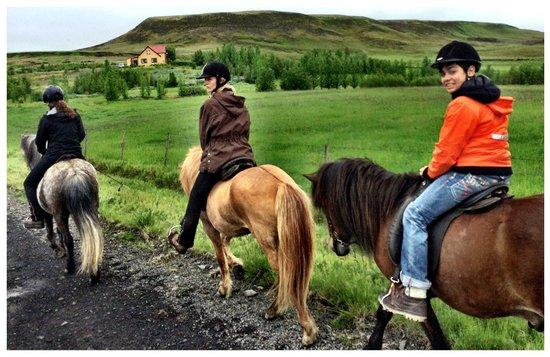 Nupshestar: Keine Angst! Reiten auf diesen Pferden ist nicht schwer.