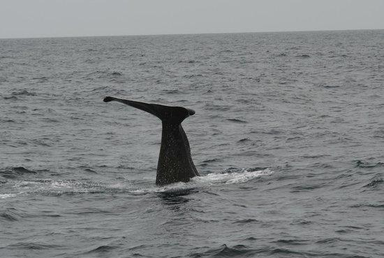 Whale Watch: dive, dive, dive !!