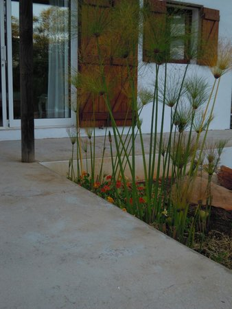 Pedras Verdes Guesthouse: plants beside our door