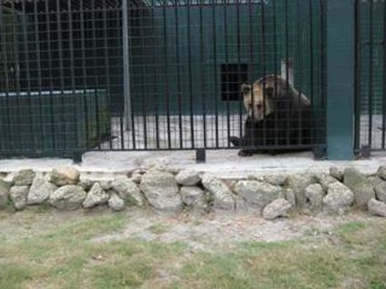Tregembo Animal Park: The large carnivorous animals at this zoo live in too small enclosures. Bears can be seen pacing