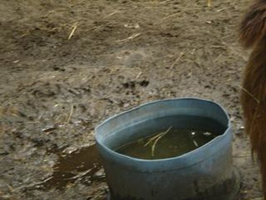 Tregembo Animal Park: Would you want to drink filthy water? This can lead to health issues for the animals. They say i