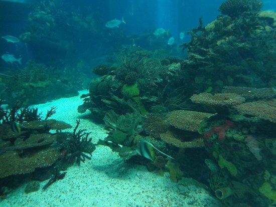 Lisbon Oceanarium : Oceanário de Lisboa