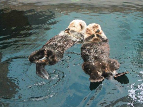 Lisbon Oceanarium : lontre