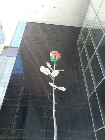 The Museum of Modern Art (MoMA) : 30' rose