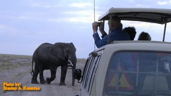 African Memorable Safaris: Tourist enjoy a memorable safari tour in Amboseli Kenya