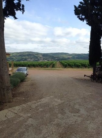 Cathar Country Wine Tours: limous vines