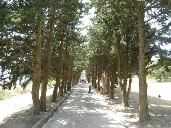 Filerimos Monastery: Δενδροφυτια.