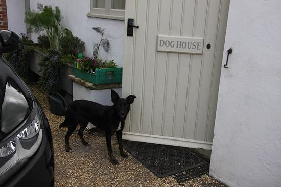 Tarrant Launceston, UK: Staying at the Dog House?