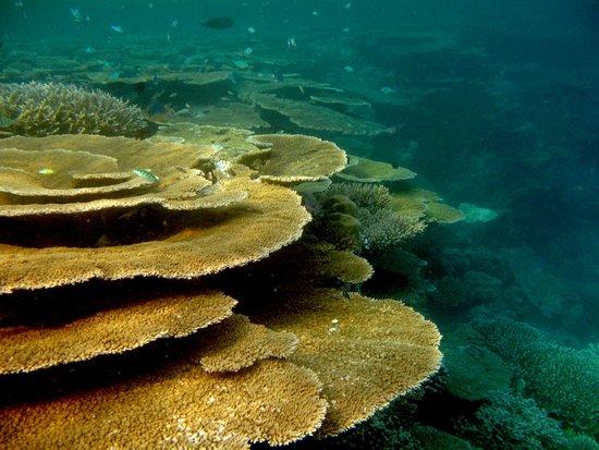 Vilamendhoo Island Resort & Spa : Vilamendhoo reef by jana.majk.com