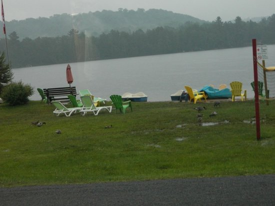 Oxtongue Lake Cottages: a rainy morning that brought feathered friends to land