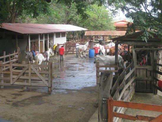 Hacienda Guachipelin: Establo de caballos