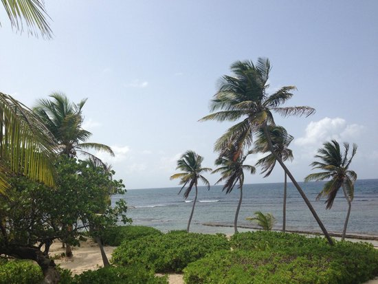 The Palms at Pelican Cove : our view from the room