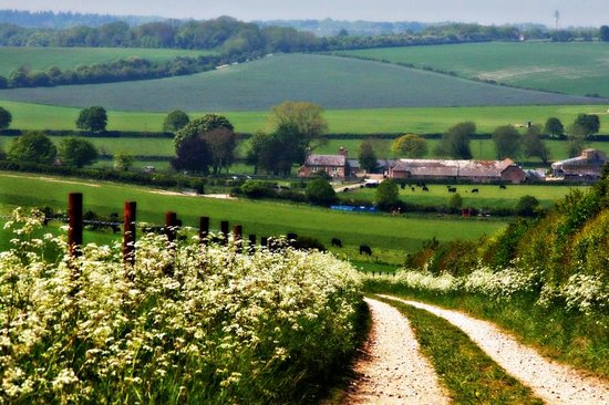 Tarrant Launceston, UK: At the heart of an organic farm