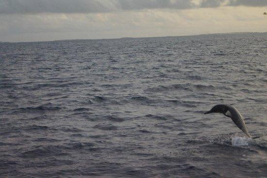 Club Med Kani : dauphin