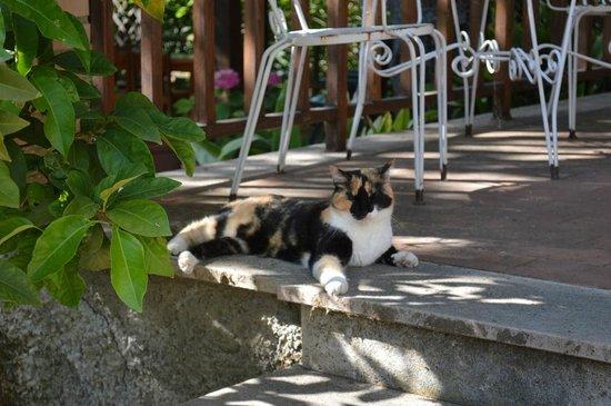 Casa del Poggio: Terrace Kitty