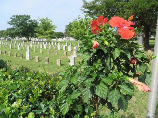 Magnolia Cemetery : The Civil War Memorial