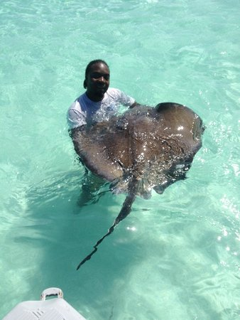 Stingray City : One of the great guides!