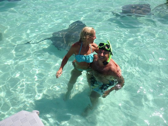 Stingray City : Hanging out with the stingrays!