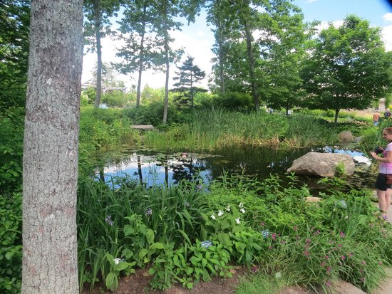 Coastal Maine Botanical Gardens: a view of the pond where the lady slippers were in bloom