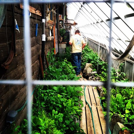 North Fork Hostel and Square Peg Ranch: Checking out Oliver's produce section