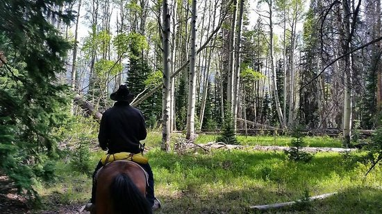 Vail Stables: Elk Springs Ride