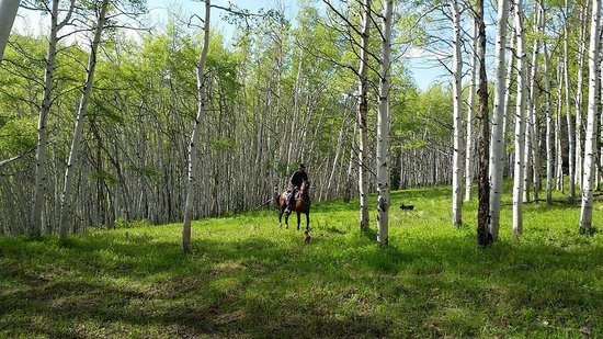 Vail Stables: Mixed terrain and plant life on the 3 hour ride.