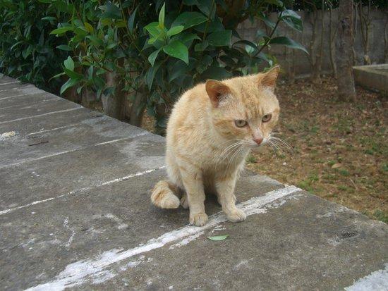 I Trulli di Alberobello - World Heritage Site: 猫もお出迎え