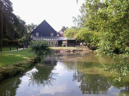 Great Hallingbury Manor: lake from rear looking at hotel