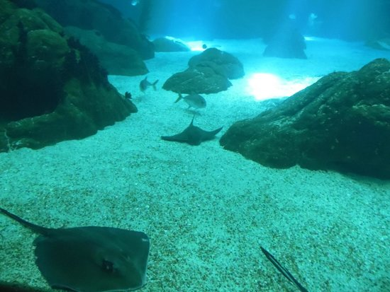 Lisbon Oceanarium : Oceanario de Lisboa - May 2014