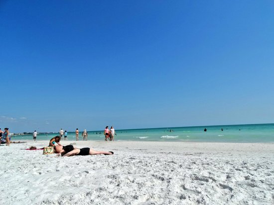 Siesta Beach : Siesta Key