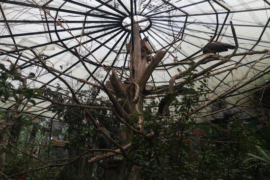 Royal Safari Garden Resort & Convention: Bird zoo