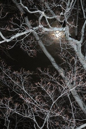 Sleepy Hollow Bed & Breakfast: The moon behind our maple tree.