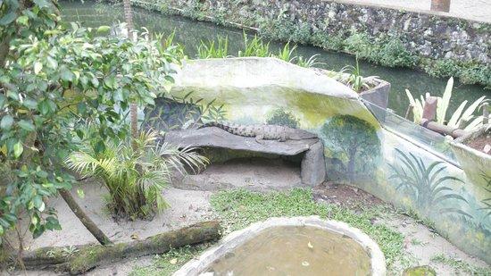 Royal Safari Garden Resort & Convention: Reptile island