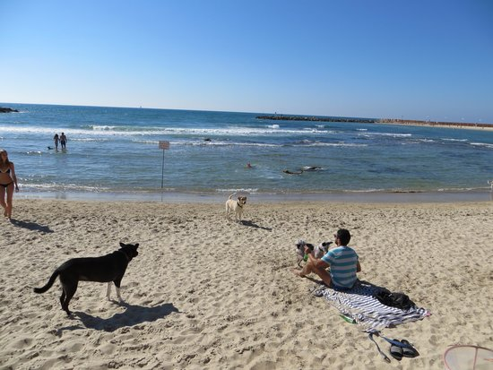 Tel Aviv Marina and Sea Center: doggie fun time