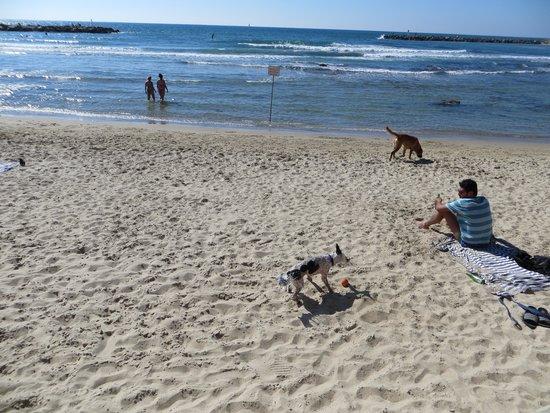 Tel Aviv Marina and Sea Center: playing on the beach