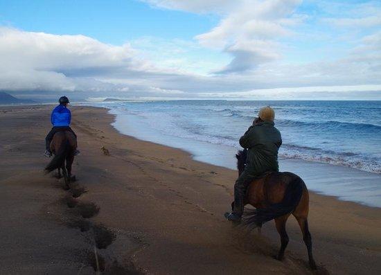 Stori Kambur Horse Rental