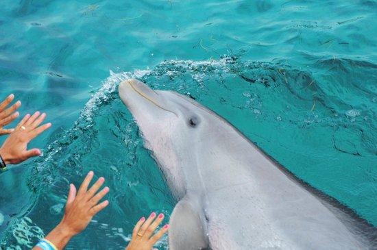 Dolphin Discovery : golfinho