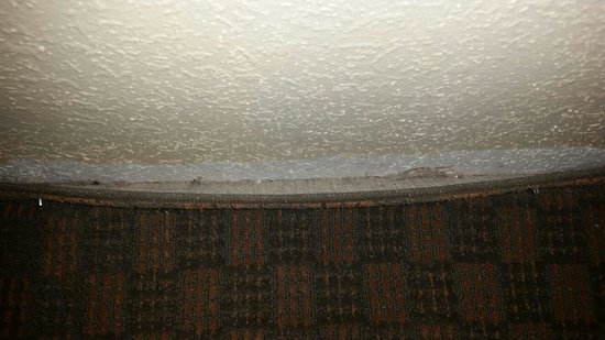 Country Inn & Suites By Carlson, Lumberton : Carpet molding? Completely coming off the wall...