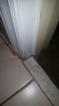 Country Inn & Suites By Carlson, Lumberton : ABSOLUTELY DISGUSTING!!!!!
