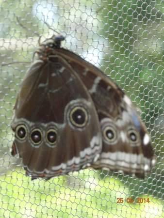 Butterfly World : Schmetterlinge