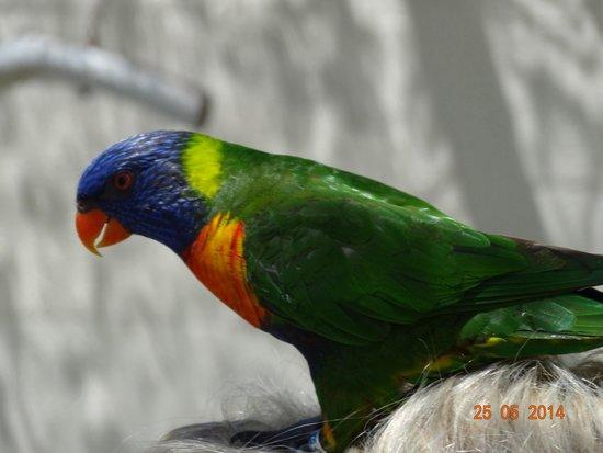 Butterfly World : tropische Finken und keine Papageien