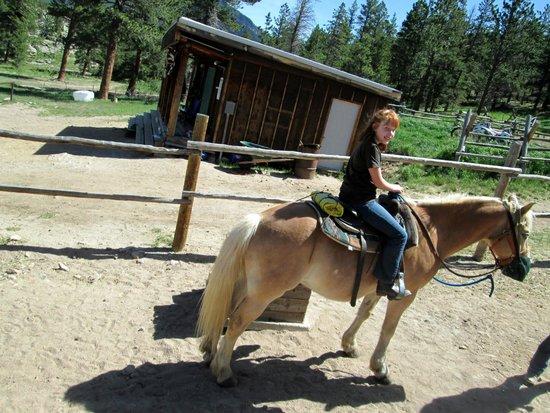 Lane Guest Ranch: horse