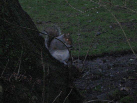 Abbey Gardens: garden squirrel