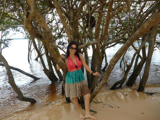Praia do Tupé : ÁRVORES PERTO DA PRAIA