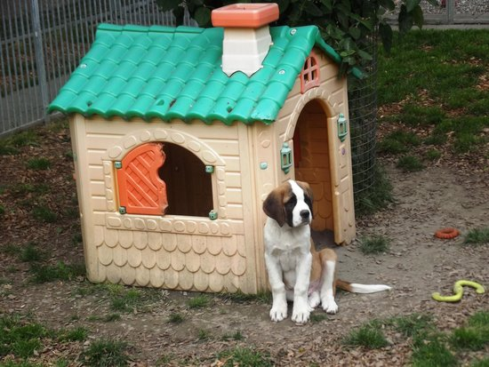 dog house foto di musee et chiens fondation st With st bernard dog house