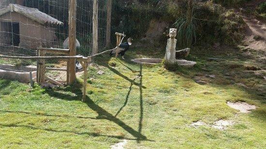 Santuario Animal de Cochahuasi: Condor in pen
