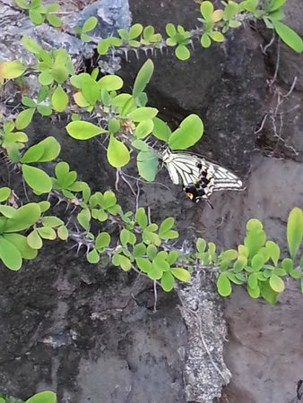Saeng's Thai Cuisine: Butterfly at Saeng's