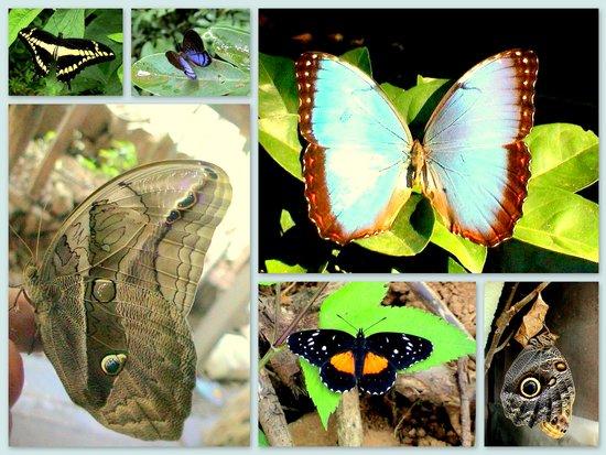 Tajo Alto, Costa Rica: Serenidad
